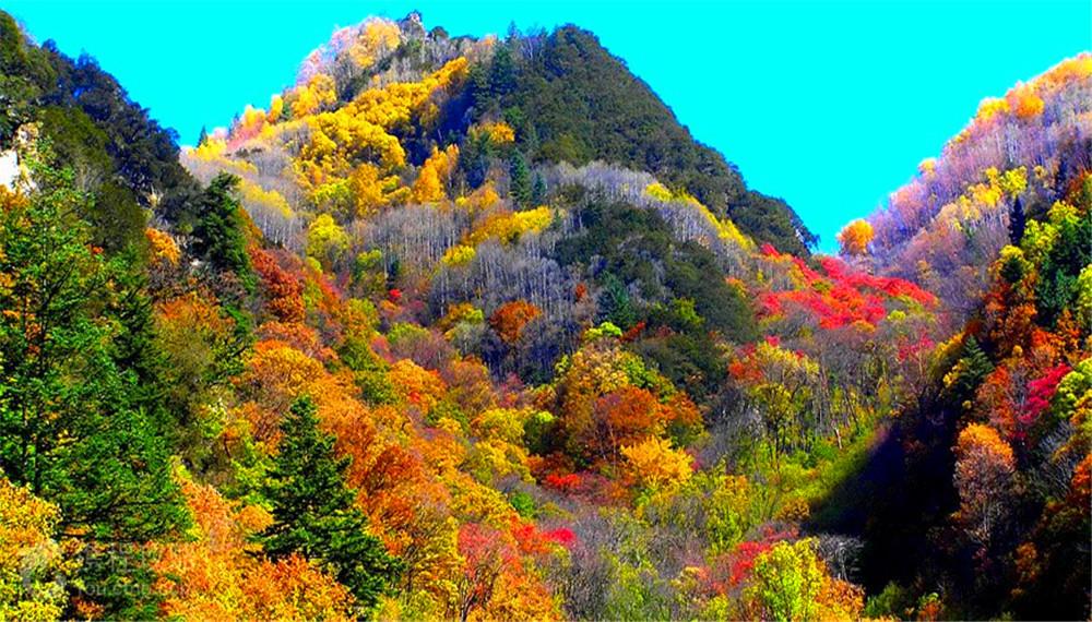 米亚罗:红叶景区比北京香山红叶风景区大180余倍